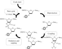 DNA/RNA Synthesis Reagents – RNA / BOC Sciences