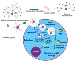 Nanoparticle-siRNA Conjugates – RNA / BOC Sciences